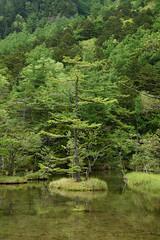 20160527 Kamikochi 4 (BONGURI) Tags: trees lake tree green forest trekking pond nikon df hiking jp  matsumoto nagano  kamikochi           myojinike       myojinpond afsnikkor2485mmf3545gedvr