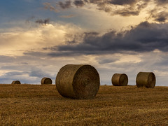 Golden cylinders (Enrico Cusinatti) Tags: travel sunset sky italy cloud nature clouds italia tramonto nuvole nuvola natura cielo minimalismo viaggi goldenhour vacanze fieno nubi vegetazione balledifieno canoneos6d oradorata enricocusinatti