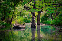 Wimberley_0016-2 (allen ramlow) Tags: trees reflection green nature water rock creek reflecting pond stream sony a6000