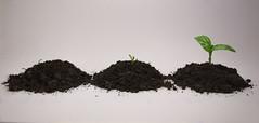 Metamorphosis (elenamalossini) Tags: life italy white plant green nature nikon indoor minimal land basil minimalism metamorphosis