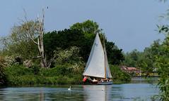 Sailing (yvonnepay615) Tags: river lumix boat yacht norfolk panasonic eastanglia strumpshaw coth gh4
