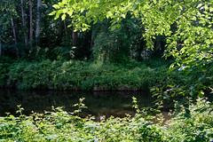 Sammamish River (thenewamtrak) Tags: river trail sammamish