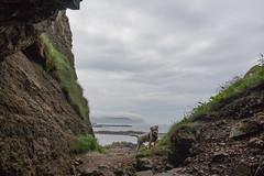 Wiggo, Gid Point (ghostwheel_in_shadow) Tags: ireland sea cliff cloud dog weather mammal coast europe unitedkingdom terrier coastal jackrussell northernireland cloudscape ulster vertebrate antrim wiggo parsonrussell gidpoint