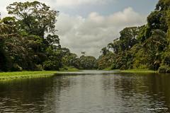 Canales del Parque Nacional Tortuguero 4 (pniselba) Tags: rio river costarica selva jungle tortuguero parquenacional parquenacionaltortuguero