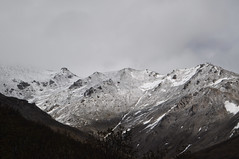 DSC_0753 (David.Sankey) Tags: alaska alaskarange mountains mountainrange denali denalinationalpark hiking nature park nationalparkdenalinationalparkandpreserve mckinley travel fog rivers savageriver savagealpinetrail trial savagealpine