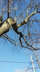 Squirrel in tree (indepsquare) Tags: independence missouri square harry truman main maple lexington st saint patrick patricks day parade santa caligon snow weather moon courthouse exchange restaurant food 2016 construction new townhome townhomes