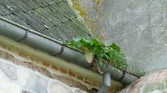 P1140062 (De Tuinen van Servaas en Dorothe) Tags: buiten restauratie kapel schade goot verstopt