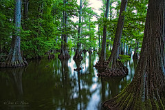 Cypress Forest (John C. House) Tags: longexposure reflections lowlight nikon tennessee nik cypress reelfootlake d810 everydaymiracles johnchouse