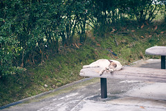 DSC06740 1 (hyeonseokoo) Tags: cat