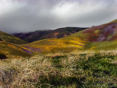 The hills of Gorman on a stormy spring day. (Lon Casler Bixby) Tags: california art nature weather clouds canon landscape spring colorful artistic fineart american rainstorm thunderstorm wildflowers wilderness storms interiordesign cloudscape scapes stormclouds fineartphotography artisticphotography naturephotography travelphotography stormscape landscapephotography wildlifephotography canonphotography outdoorphotography fineartprints gormancalifornia weatherscapes neoichi loncaslerbixby