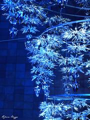 Blue and silver (DameBoudicca) Tags: christmas blue japan azul silver weihnachten tokyo navidad blu bleu  nippon roppongi  jul blau nol natale  japon giappone  minato nihon tokio silber bl plateado japn    argenteo
