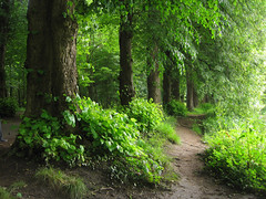 Into the Woods (karvainen kana) Tags: trees green nature forest woods path atmosphere pathway
