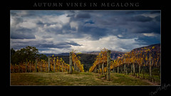 Autumn Vines in Megalong (Just1Thing) Tags: autumn megalong megalongvalley