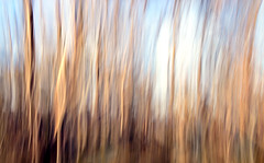 Snow Gum Abstract (phunnyfotos) Tags: trees winter abstract nikon australia victoria motionblur alpine vic alpinenationalpark snowgums northeastvictoria bogonghighplains kiewavalley intentionalcameramovement mountcope d5100 mtcope nikond5100 phunnyfotos