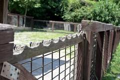 HFF Chewed Edition (AndyM.) Tags: wood metal canon fence asheville northcarolina xsi hff 2255mm