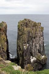 Isle Of May - Image 40 (www.bazpics.com) Tags: lighthouse bird nature landscape island scotland gull may reserve scottish puffin beacon isle sanctuary guillemot barryoneilphotography