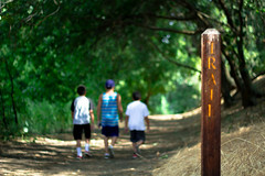 Going on a Hike (Crystal_rivera) Tags: trees green trails hike