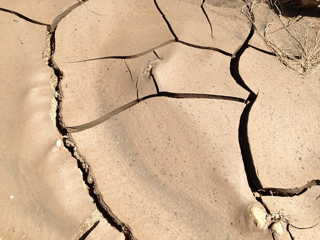 Cracks in the Mud