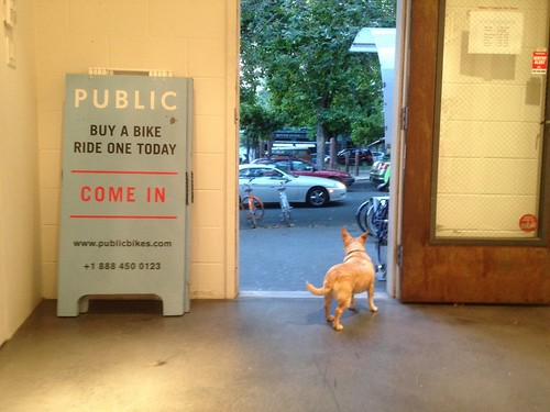 Public Bike: Reilly the Guard Dog