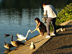 Feeding the Swan (dons projects) Tags: city blue summer people brown white canada green water sunshine birds vancouver swan downtown bc feeding zoom britishcolumbia candid ducks sunny august olympus feed sonnig sonne zuiko vancouverbc lostlagoon evolt e500 zd fourthirds 1445mm 2013 photoscape seeninvancouver kodakccd donsprojects