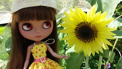 Pretty Like A Sun Flower