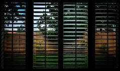 Las Vegas rain 1 (Swallia23) Tags: home window rain drops shutters