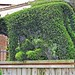 Foundation topiary