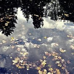l'abbraccio tra terra e cielo (Claudia Gaiotto) Tags: autumn trees sky water leaves clouds reflections season floating autunno otono abbaziadivallombrosa