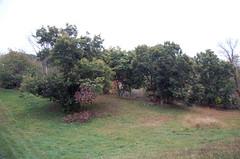 "Chestnut Trees <a style=""margin-left:10px; font-size:0.8em;"" href=""http://www.flickr.com/photos/91915217@N00/10303086943/"" target=""_blank"">@flickr</a>"