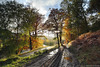 Lyon tracks (SwaloPhoto) Tags: road autumn trees rain zeiss forest river scotland shadows availablelight perthshire sunburst bracken ze glenlyon riverlyon thehighlands bridgeofbalgie canoneos5dmkii distagont2821 distagon2128ze