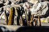 (Damien Cox) Tags: wood uk sea beach sand nikon rocks grain elmer bognorregis damiencox dcoxphotographycom