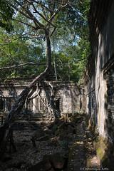Le temple de Beng Mealea