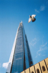 (EddieDerbyshire) Tags: blue summer bird london 35mm canon lens perfect angle pigeon air flight wide sunny adapter moment shard mid af35ml