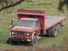 Chevrolet C-60 1977 (RL GNZLZ) Tags: chevrolet 1977 c60 americantrucks chevroletc60