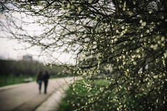 Spring (kostamilicevic) Tags: flowers love spring bokeh serbia lovers belgrade beograd srbija
