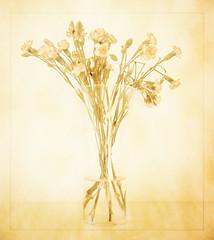 pale colours (t1ggr) Tags: flowers stilllife texture samsung pale carnation csc palecolours platinumheartaward mygearandme mygearandmepremium nx1100