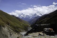 Yak Kharka (Subhozrhapsody) Tags: nepal trekking himalaya annapurna manang yakkharka sigma1020 annapurnacircuittrek d5100