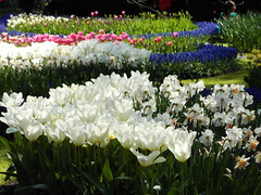 Keukenhof ... (Kindergartenkinder) Tags: park blumen frühling keukenhof tulpen 2014 narzissen lisse kindergartenkinder