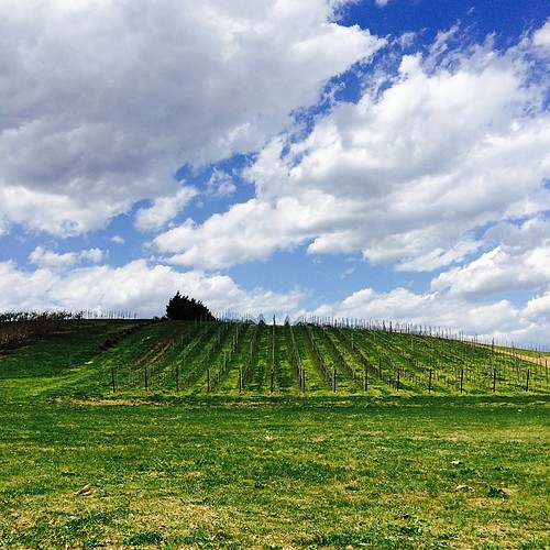 A beautiful day for wine tasting in Maryland.