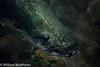 _MG_2969.jpg (SkulkingDunnock) Tags: china fish animals tropical hangzhou arapaima