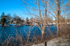Crest (Blister Pop) Tags: park winter lake cold water pond bare