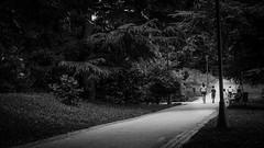 A sight from Trentino - the forest (Pablo Apiolazza) Tags: world travel people travelling tourism sports landscape living europe moments pablo lifestyle leisure cinematography trentino storytelling trekker traveldestinations valsugana tbex travelvideo ttot worldtrekker pabloapiolazza apzmedia