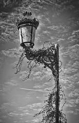 Fanal i avi (streetlight and plane) (Artfolch) Tags: sky farola streetlight ivy cel cielo nubes hiedra nvols fanal godella hedrera