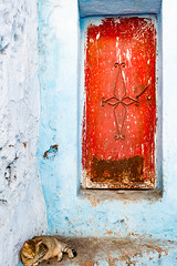Cat corner (Pamela Sia) Tags: blue red cats streets doors streetphotography morocco chefchaouen travelphotography