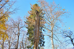 The wood giant (mj.cs) Tags: park wood parque tree giant switzerland ticino nikon suisse rbol lugano suza