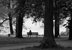Am Weiensee / Lakeside (w.friedler) Tags: park baum bume tree bank bench