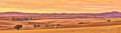 Gomersal Panorama (Valley Imagery) Tags: autumn panorama sunrise sheep farm south australia farmland valley barossa imagery gomersal