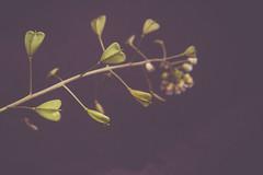 Herzen (ChristinaWieck) Tags: olympus herz dunkel minimalistisch tag202 365fotosorg
