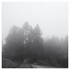 144/366 black white day (tideloon) Tags: blackandwhite square fujifilm 16mm entwicklung blackwhiteday 366dayproject fujifilmxt1 fujinonxf16mmf14rwr 366the2016edition 3662016