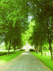 Tree-lined avenue to the Old Parish Church -Albury Park (John(cardwellpix)) Tags: albury surreyuk alburypark nrguildford sunday29thmay2016theoldparishchurch